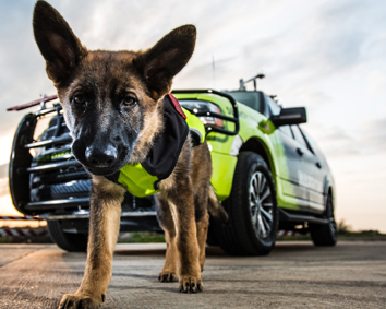 Storm Warriors SAR Puppy image